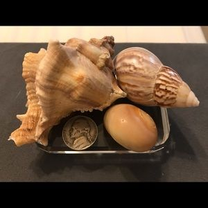 🐚 3/$12! Shells